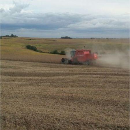 Início de colheita em Jóia (RS). Envio de Glauber Sangalli