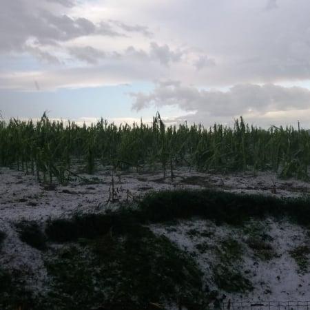 Chuva de granizo em Campo Erê (SC) - Foto: Reprodução/Redes sociais