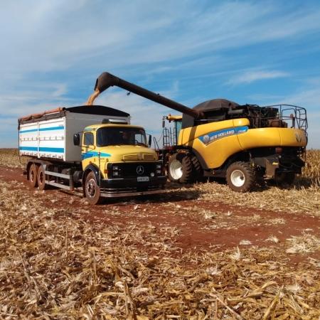 Colheita de milho safrinha da Família Orloviks em Barretos-SP