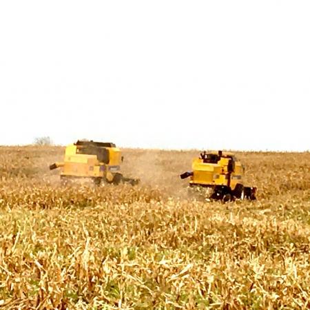 Colheita do milho safrinha em Palotina no oeste do Paraná, por Valdemar Patel.
