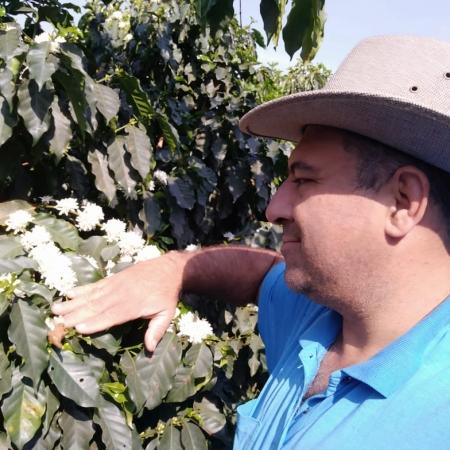 Florada de café em São Pedro da União (MG). Envio de Fernando Barbosa