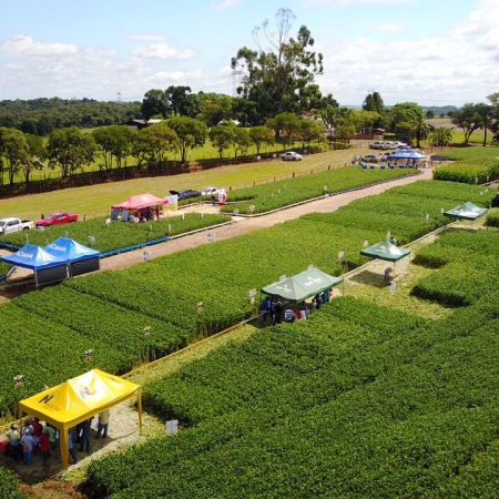 Dia de campo Soma Agronegócios, em Nonoai (RS). Envio de George André Tremea