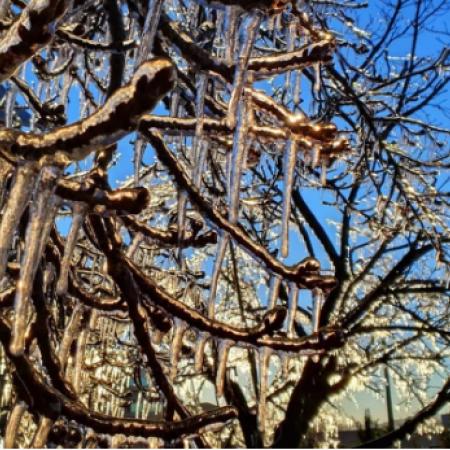 Árvores com gelo em São Joaquim (SC) - Foto: Mycchel Legnaghi | Reprodução redes sociais