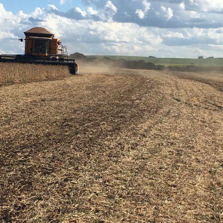 Início de colheita da soja em Passo Fundo (RS). Envio de Juliano de Souza Carmo