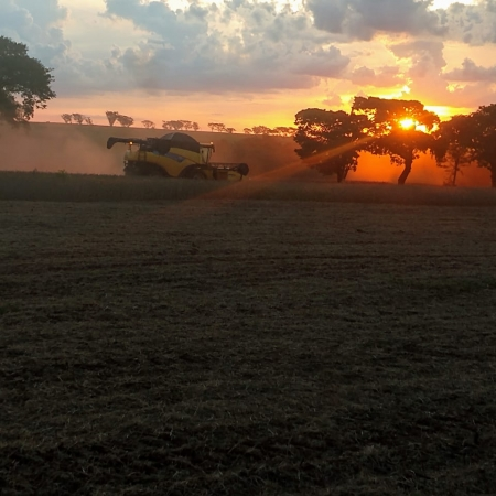 Colheita de soja em Barretos (SP). Envio da Família Orloviks