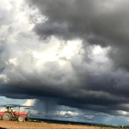 Registro do plantio de milho região da SEALBA, na Faz. Massaranduba em Heliópolis (BA) - Luiz Fernandes
