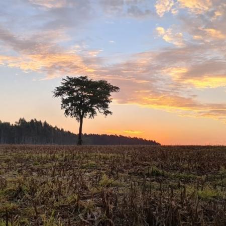 Fazenda Reconquista Jateí/MS Foto de Nereu Cesar Medeiros