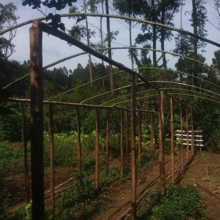 Projeto estufa agrícola de baixo custo em Itaiópolis (SC). Envio de Paulo Marcelo Adamek