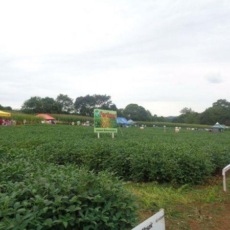Dia de Campo realizado no município de Vila Maria (RS). Enviado pelo Técnico Maikon Boff
