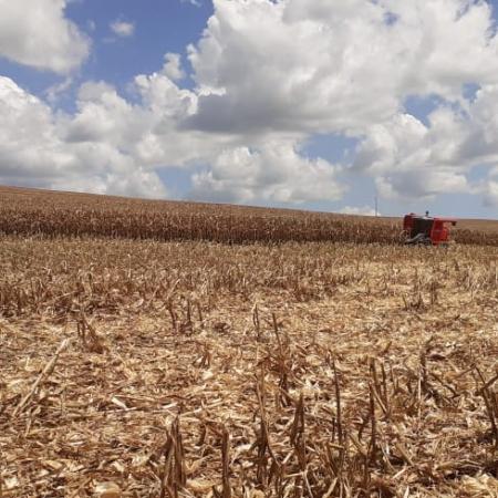 Colheita de milho AG 9025 Sitio Santa Rita - Santa Cruz - Chopinzinho(PR)