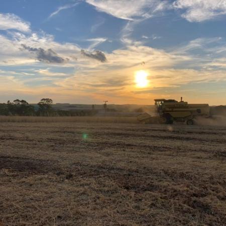 Início da colheita em Palmeira das Missões (RS) - Diego Camara