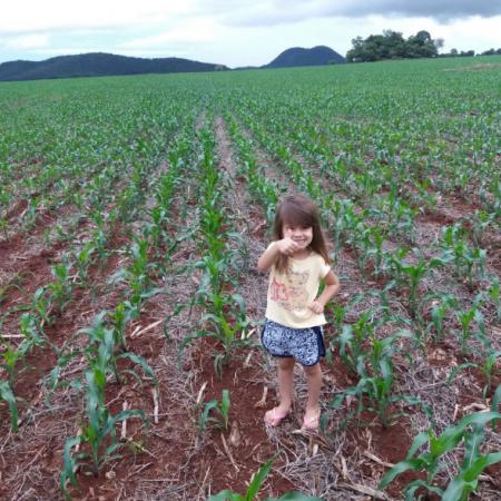 Lavinya Isadora na lavoura de Milho na Fazenda São Miguel. 'Cultivando Valores'. Envio de Anderson Pereira da Silva