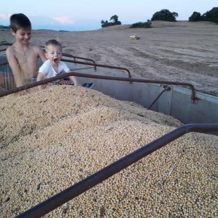 Igor Gabriel e João Miguel acompanhando a colheita do avô Adelar Capoani, em Santo Antonio Do Sudoeste (PR). Envio por Adelar Capoani