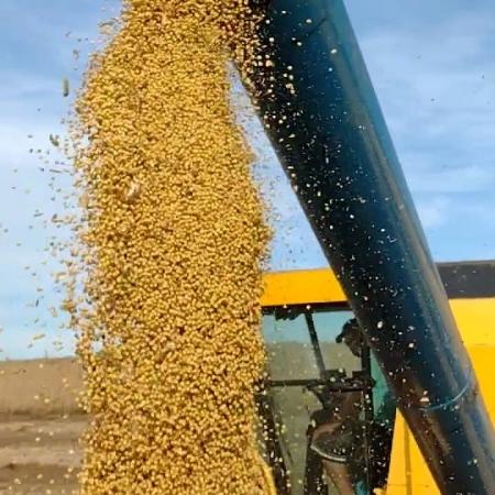 Colheita de soja na cidade de Getúlio Vargas (RS) - Roges Muzzo
