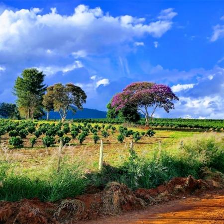 Cabo Verde/MG Foto enviada por Diego Pereira