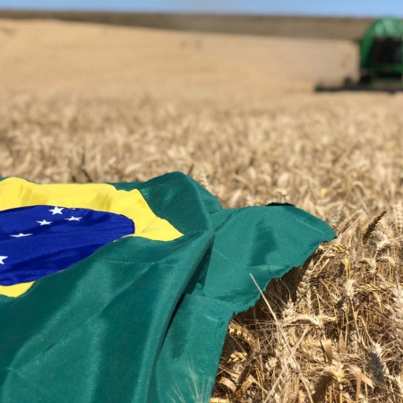 Colheita de trigo em São Domingos/SC. Foto enviada por Carlos Bortoli