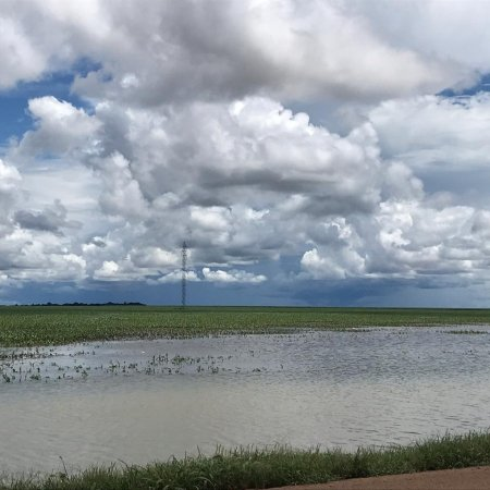 Chuvas em lavouras de Tapurah (MT). Registro de Jonas Amalfi Olivi