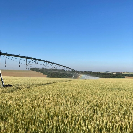 Irrigando trigo no RS Foto enviada por Jones Lauermann