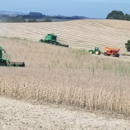 Finalizando a colheita na Agrícola Irmão Baseggio em Muintos Capões (RS) - Claudimar Baseggio