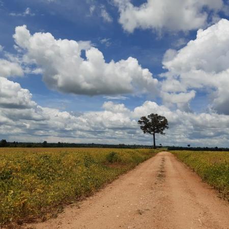 Colheita Agropecuária Mariana em Alta Floresta (MT). Envio de Vilma Julião