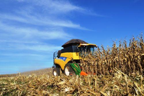Colheita de milho no MS