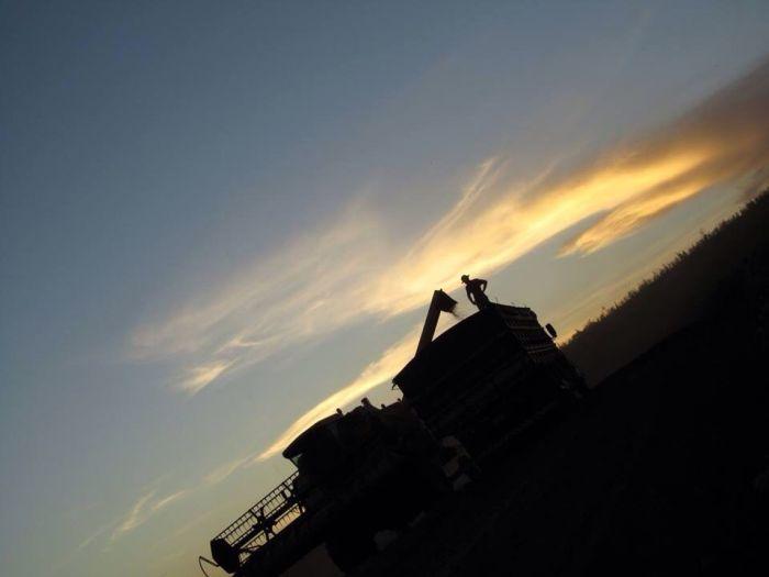 Imagem do Dia - Colheita de soja em Mercedes (PR), dos irmãos Lucian
