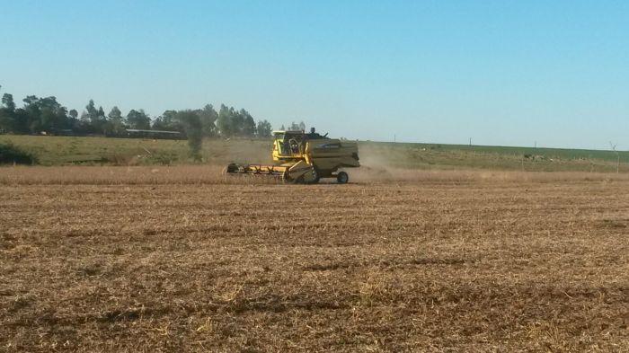 Imagem do dia - Colheita de soja em Curuguty (PY), do produtor Eliseo Guntzel