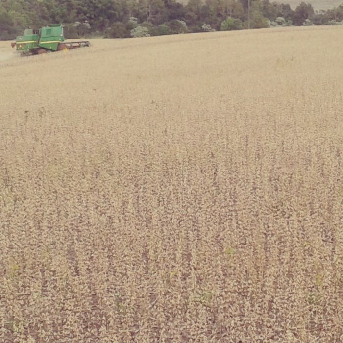 Imagem do Dia - Colheita de soja safrinha em Três de Maio (RS), da família Rossi.  Foto de Douglas Rossi