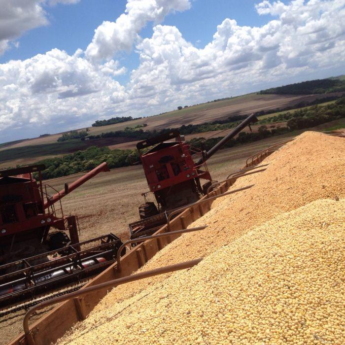 Imagem do Dia - Colheita de soja em Fênix (PR), da família Rudek