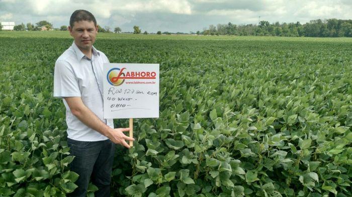 Lavouras de soja na região de Eldorado/OH