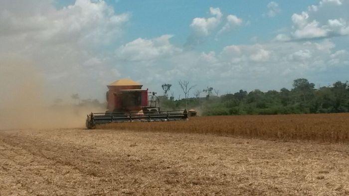 Imagem do Dia - Colheita de soja em Itanhangá (MT), envio do Engenheiro agrônomo Douglas Mezzomo