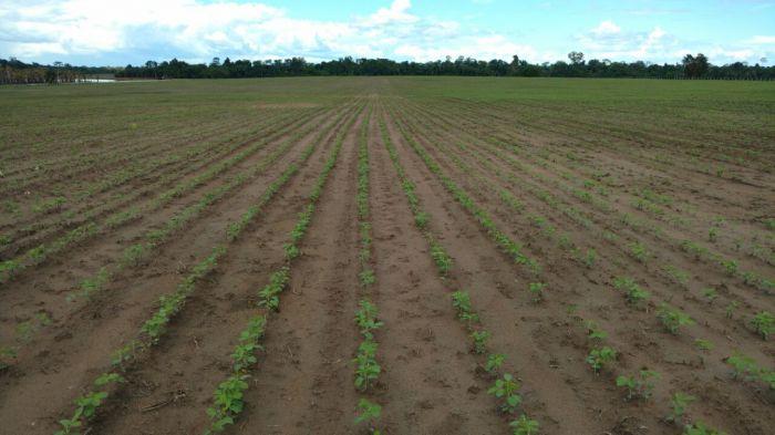 Imagens do dia - Lavoura de soja na fazenda Santa Luzia. cidade de Iracema (RR). Proprietário Antônio Olivério