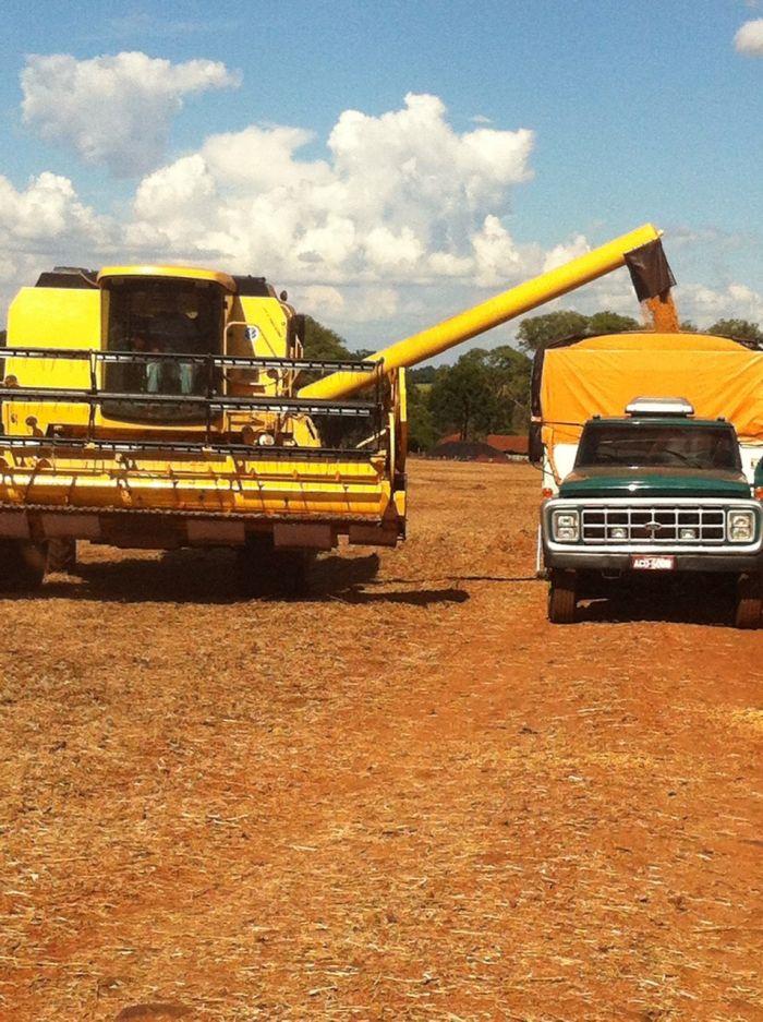 Imagem do dia - Colheita de soja em Alvorada do Sul (PR), do produtor de Antonio Rubens Gasparelli e filhos 2