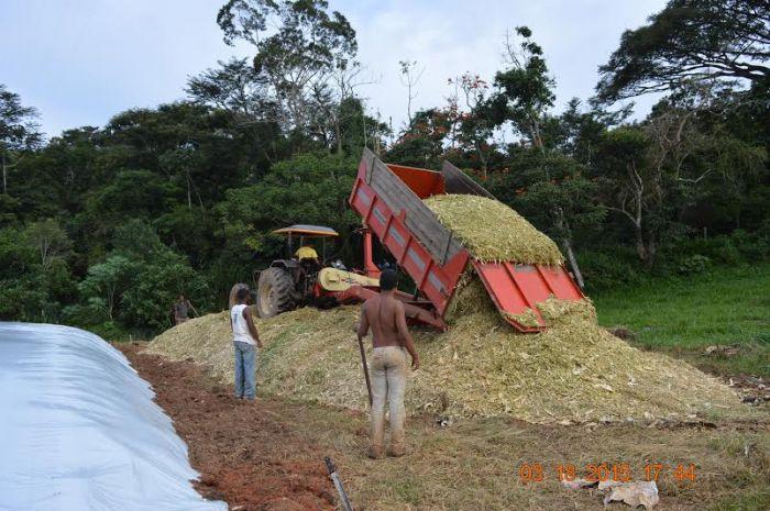 Imagem do dia - Foto de silagem de milho da Alfa Milk Fazenda Sesmaria, em Olaria (MG). Envio de Guilherme Alves de Mello Franco