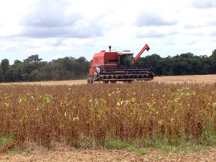 Imagem do Dia - Colheita de soja na Fazenda Santo Expedito  em em Querência (MT), do produtor de Márcio Luiz Pizzolatto.  Envio de Deliana Perin Pizzolatto