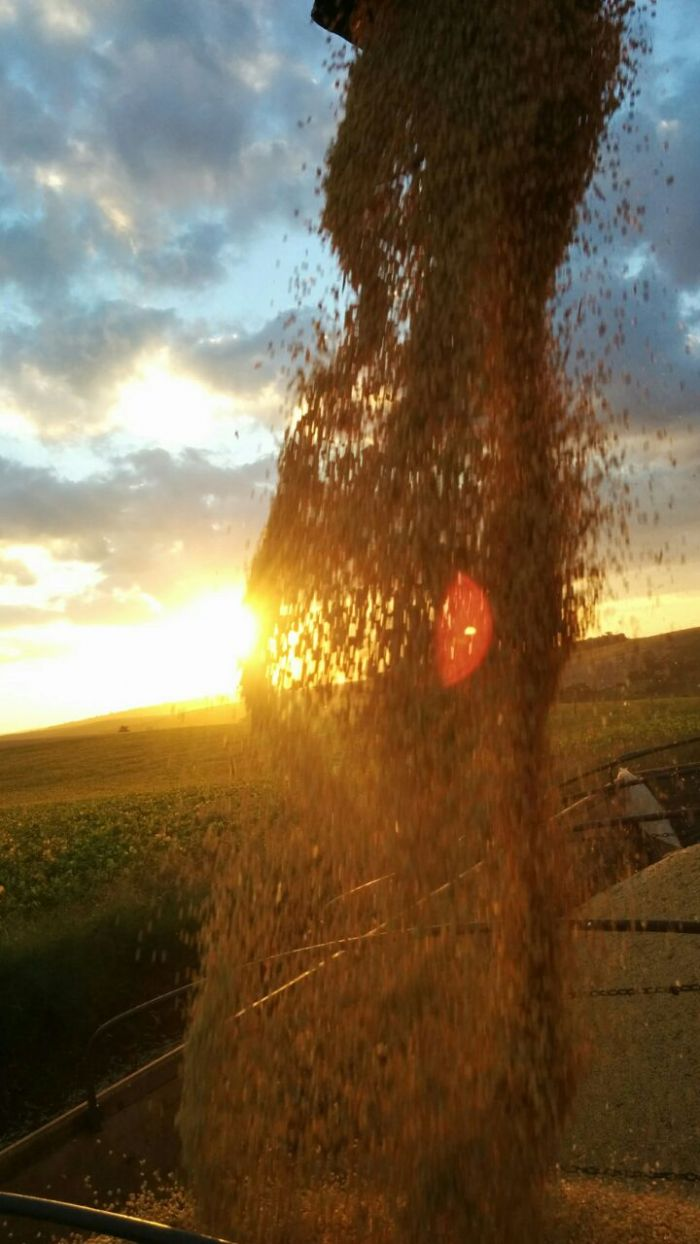 Imagem do Dia - Colheita de soja em Ipiranga do Sul (RS), na propriedade de Roberto Zem