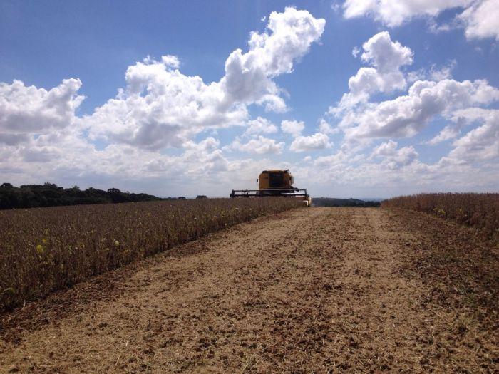 Imagem do Dia - Colheita de soja em Água Santa (RS),  propriedade de Honório Bacega. Envio do Engenheiro Agrônomo Aluisio Besutti
