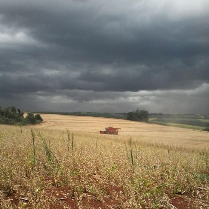 Imagem do Dia - Colheita de soja em Mercedes (PR), da produtora Sara Gabrieli Zancanella
