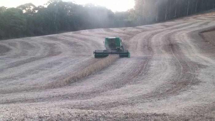 Imagem do Dia - Lavoura de soja em Áurea (RS), do Engenheiro Agronômo Renato Kujawinski
