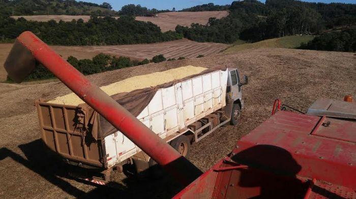 Imagem do dia - Colheita da soja em Montauri (RS), do produtor rural Jonatas Roso
