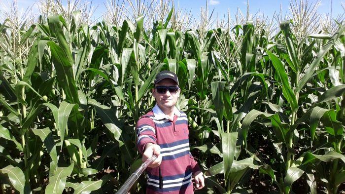 Imagem do Dia - Lavoura de milho em Itambé (PR), do produtor Nivaldo Forastieri
