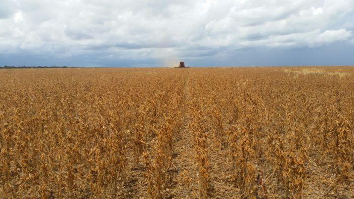 Imagem do Dia - Colheita de soja em Uruçuí  (PI), na  Fazenda Santo Expedito, do produtor Lucas Laba Silva