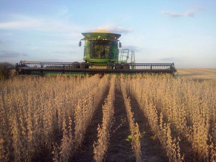 Imagem do Dia - Colheita de soja em São Sepé (RS), na granja Baixo Grande. Imagens de Paulo Bolzan