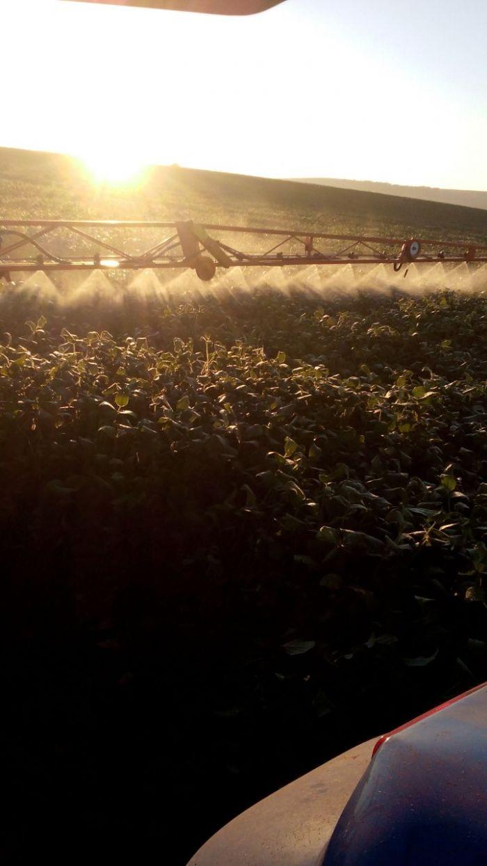 Imagem do Dia - Lavoura de soja em Francisco Beltrão (PR), do produtor Anderson Manica