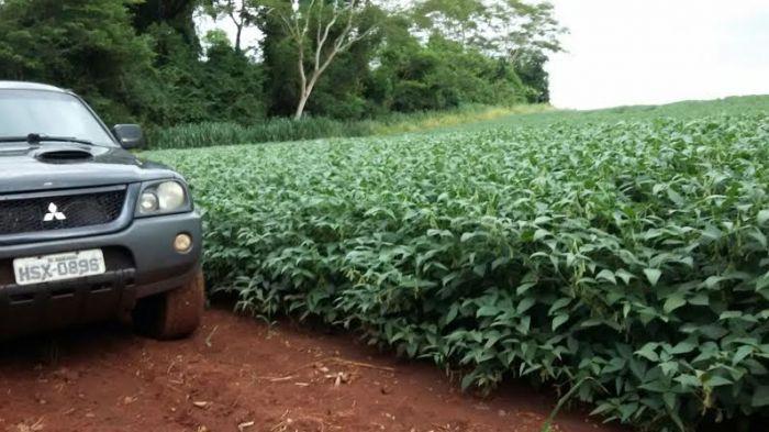 Imagem do dia - Lavoura de soja em Douradina (MS). Enviado pela engenheira agrônoma, Rejane Narciso Brigone