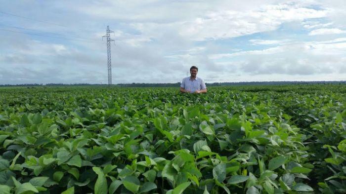 Imagem do dia - Lavoura de soja na região de Juara (MT). Foto do produtor rural, Gabriel Pinoti.