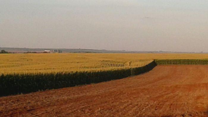 Imagem do Dia - Lavoura de milho safrinha em Toledo (PR), na propiedade de Cezar Pesarini