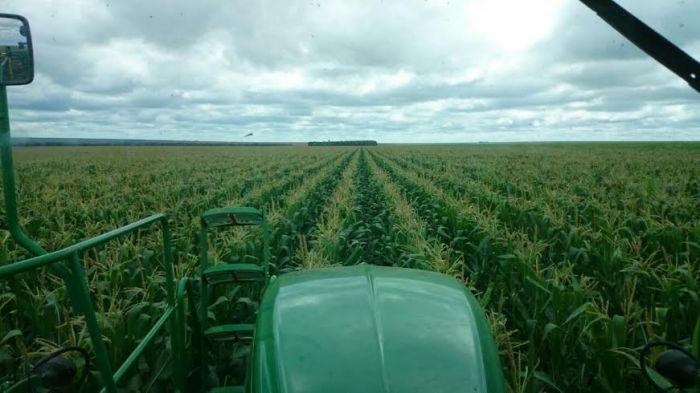 Imagem do dia - Aplicação de fungicida na lavoura de milho na Fazenda Amanhecer em Campos de Júlio (MT), do produtor rural Maurício Calgaro