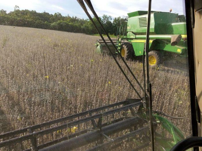 Imagem do Dia - Colheita de soja em Pérola DOeste (PR), na propriedade de Neri Bressan. Envio do técnico agrícola Laercio Crestani.