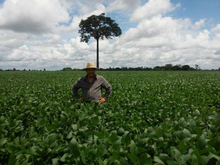 Imagem do dia - Lavoura de soja em Ariquemes (RO), do produtor Gilberto Borjio. Foto enviada por Renildo Rolim.